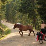Pogoń za ucieczką – Bezdroża Rumunii