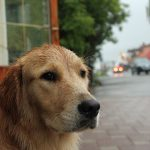 W deszczu na Karlovac