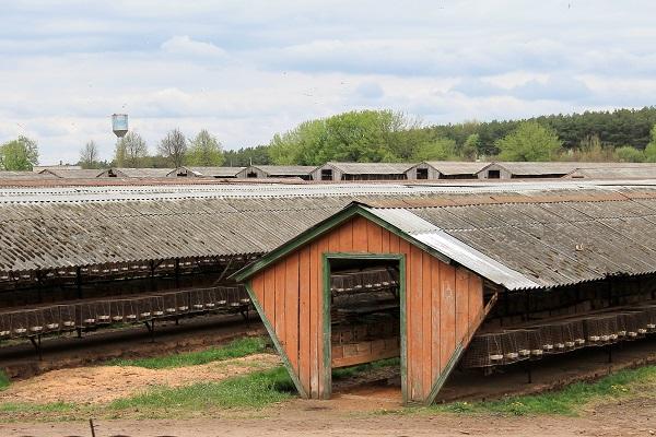 Kołchoz sowchoz na białorusi