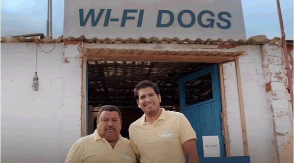 wifi dog