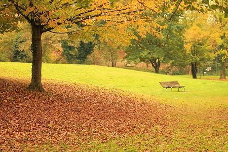 Park w Citta di Castello