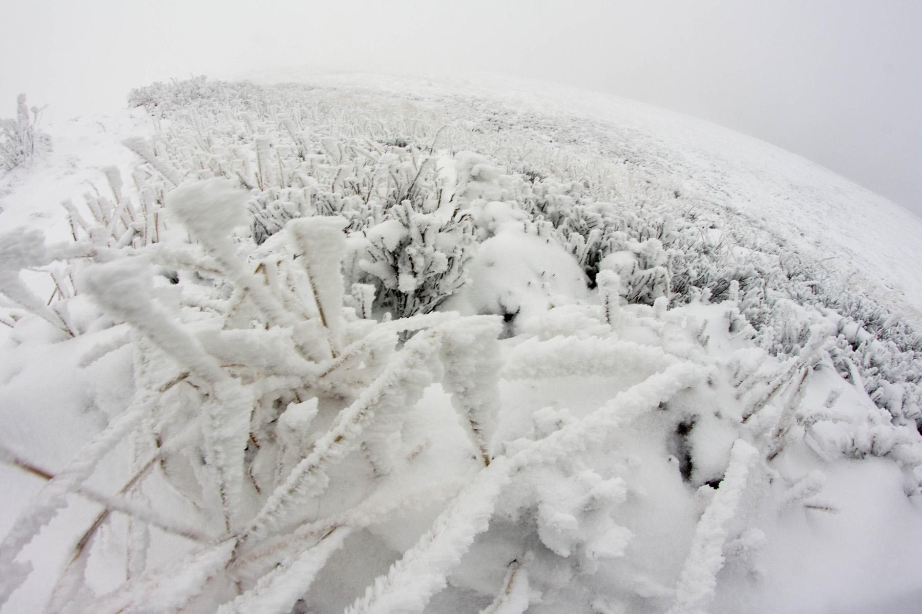 Smerek Zimą