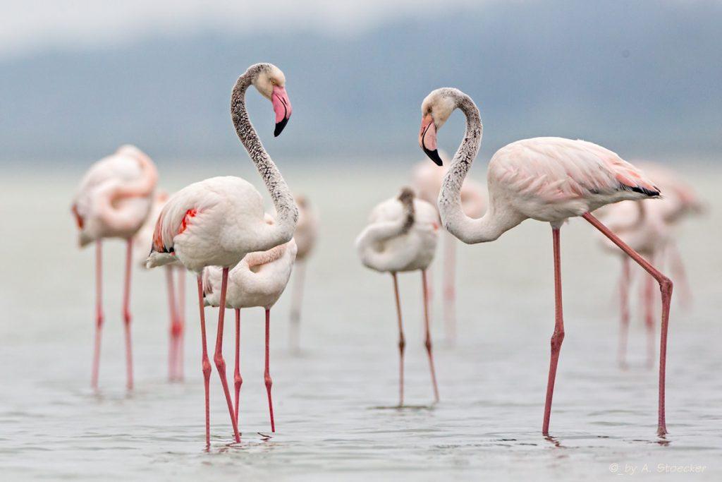 zdjęcie z www.nature-of-cyprus-photography.com