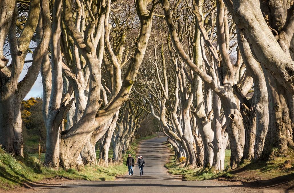 Las w Irlandii Północnej Gra o tron dark hedges