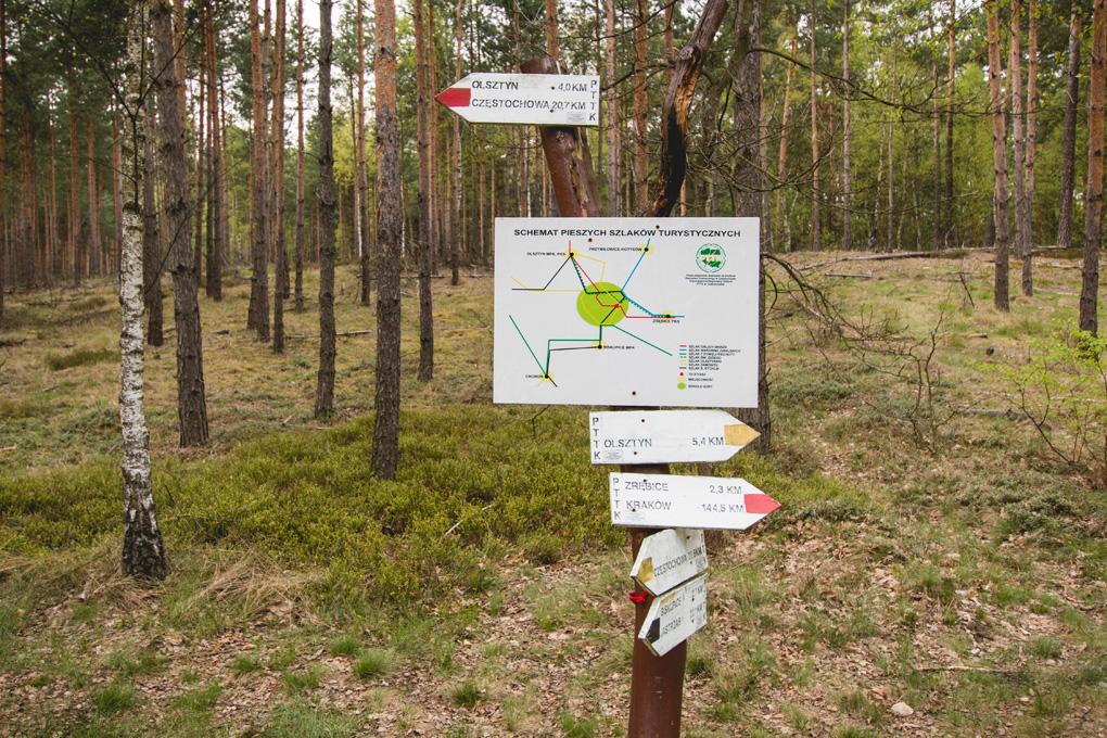 Szlaki rowerowe i pierwsze śląskie jura