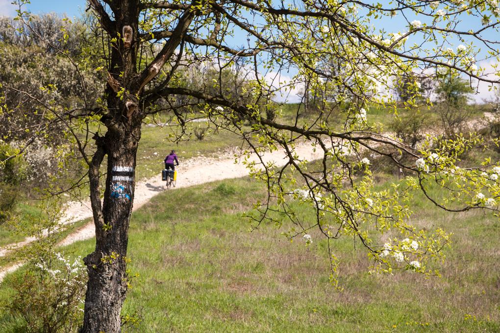 Szlaki rowerowe na Jurze