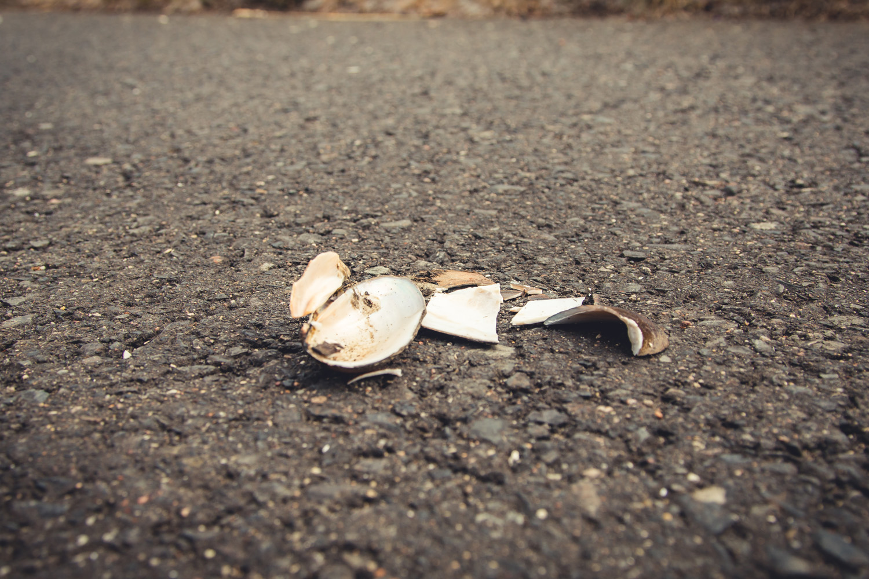 Na drodze znaleźć można często skorupy małży, które z wysokości zrzucają mewy i inne ptaszyska, aby te rozbiły się o asfalt i ukazały swoje smakowite wnętrze.