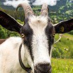 Oberland Berneński, czyli jak było na wyjeździe z National Geographic Traveler?