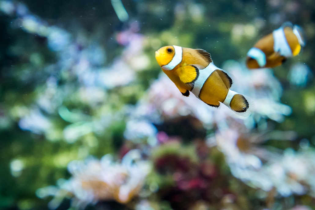Oczywiście nie tylko takie małe rybki są w oceanarium. Jest też ogromne akwarium z rekinami i innymi tym podobnymi, jednak coś nie mogłem złapać ostrości i nie mam fajnych zdjęć :D